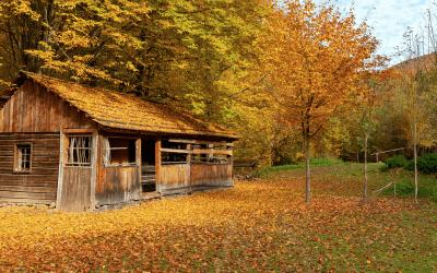 Roof Maintenance in the Fall Season